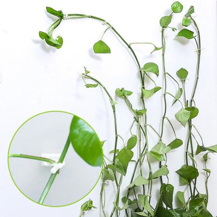 Plant Climbing Wall Clip