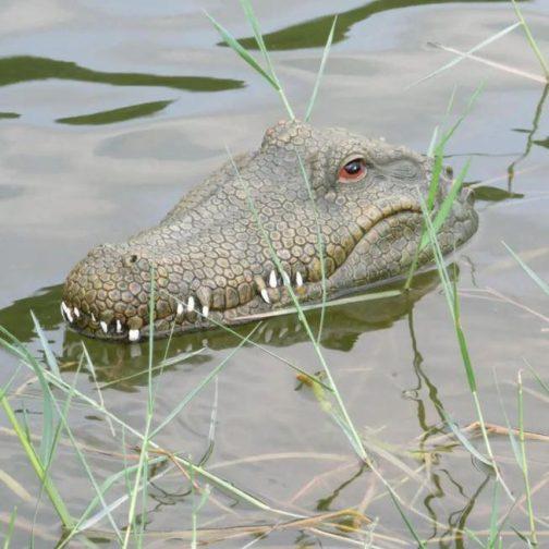 Crocodile Head Speed RC Boat