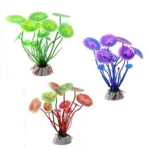 Aquarium Grass Plant