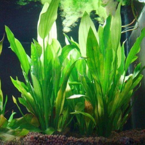 Water Plant Aquarium Decor