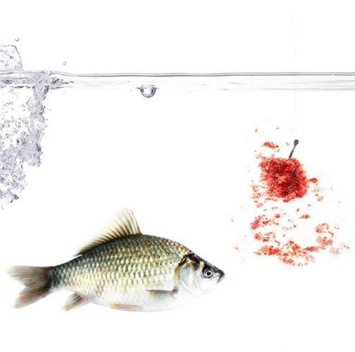 Addictive Carp Fishing Bait