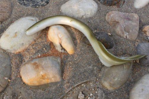 Softbait Eel Lure (5pcs)