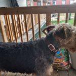 Noise-free design Pet hair clipper photo review