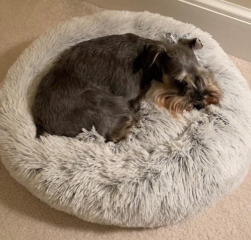 Comfy Calming Pet Bed photo review